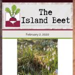 The Island Beet — February 2nd, 2020