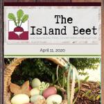 Island Beet — April 11th, 2020